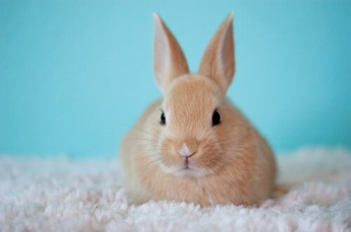 Article : L'envol du petit lapin